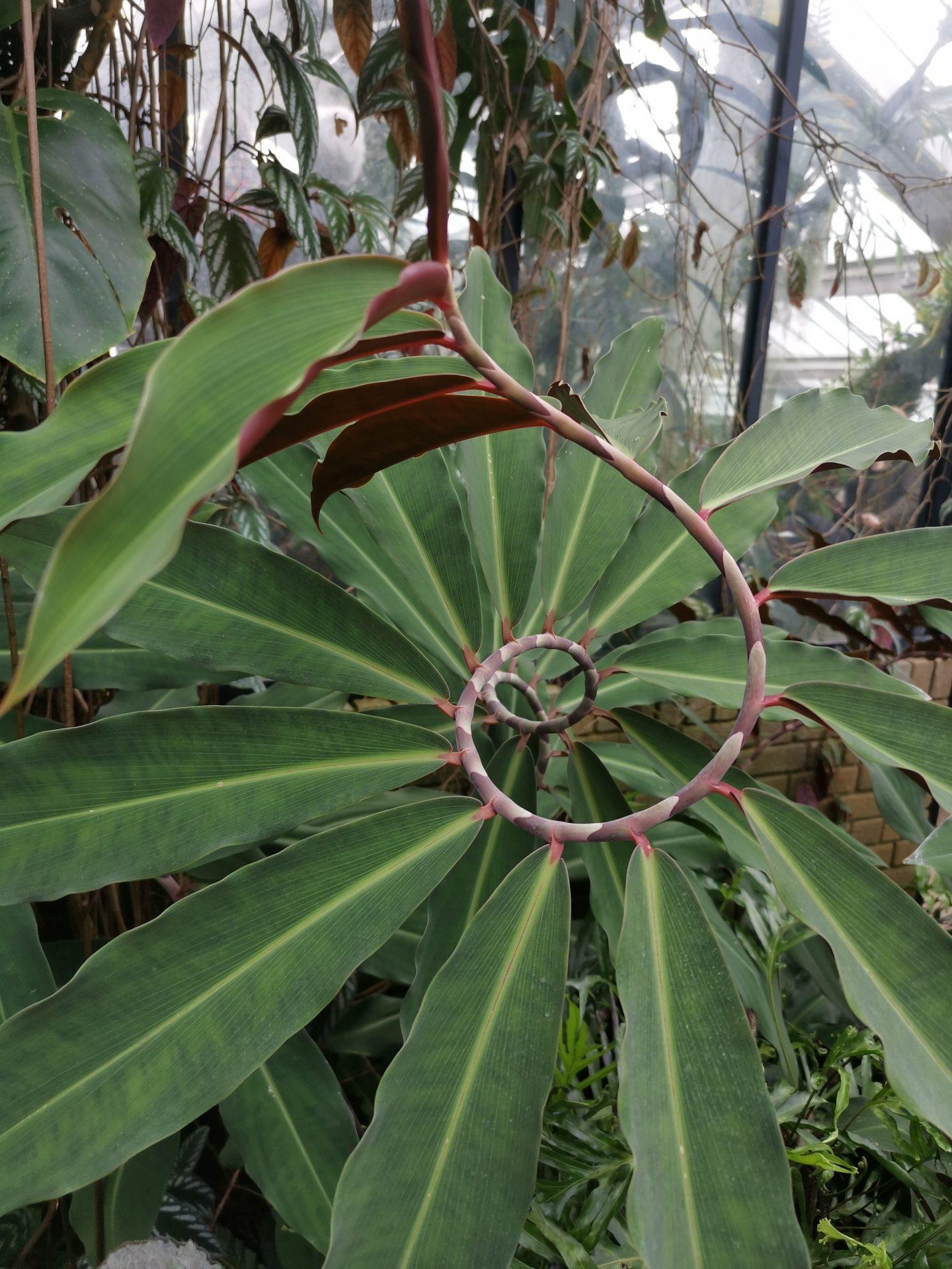 Kew garden plants