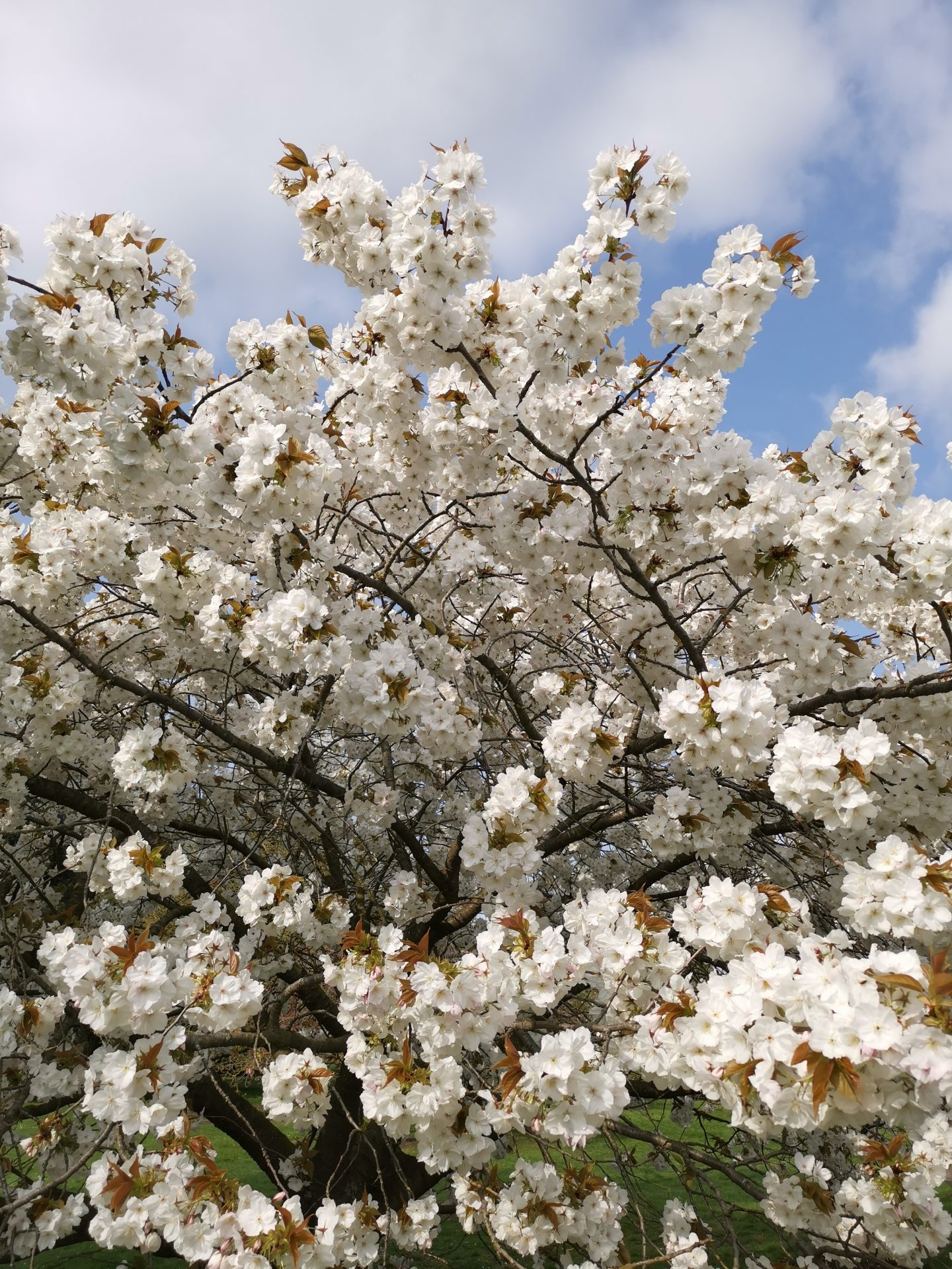 Kew garden flowers